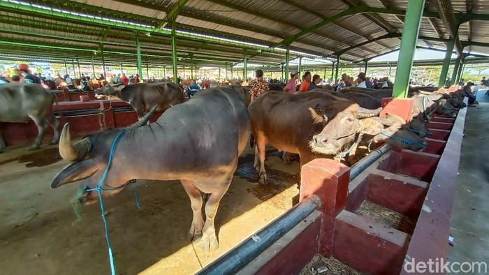 Penyembelihan kerbau sebagai hewan kurban di Kudus, Jumat (31/7/2020).