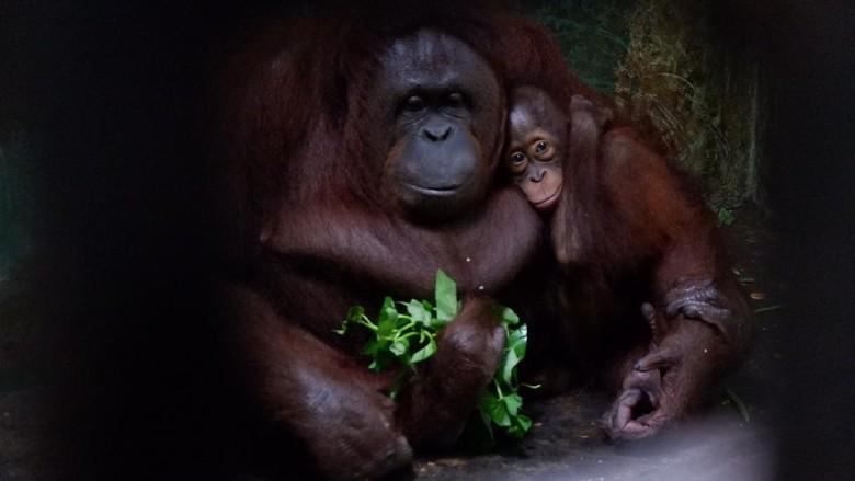 Serulingmas Zoo di Banjarnegara