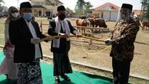 Kunjungi Masjid di Serang, Maruf Amin Berkurban Sapi Limosin 878 Kg