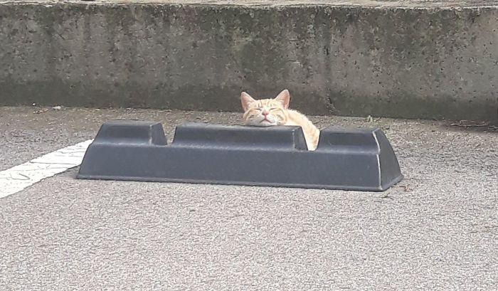 kucing di bumper parkir