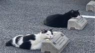 Potret Kucing yang Santuy Tiduran di Bumper Parkir