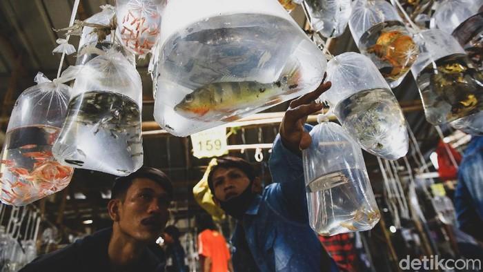 Sentra pasar ikan hias di Parung, Bogor, Jawa Barat, ramai dipadati pengunjung. Berikut foto-foto terkininya!