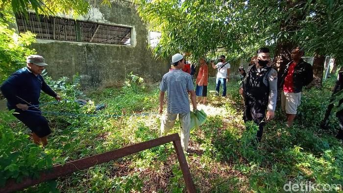 Polisi saat melumpuhkan kerbau ngamuk di Kudus, Sabtu (1/8/2020).
