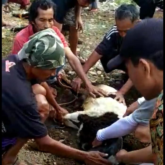 Sembelih Kambing Kurban di Tasikmalaya