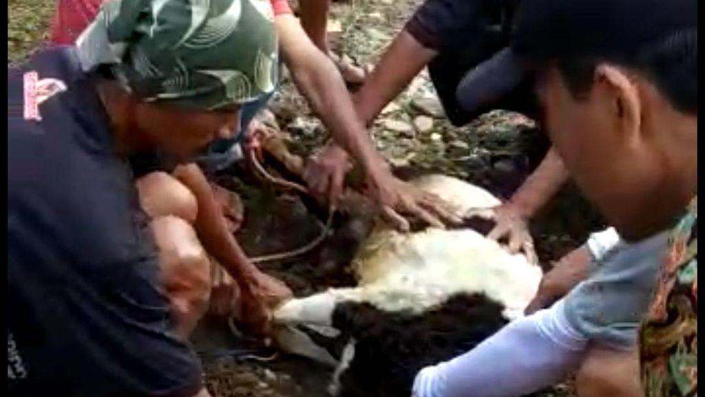 Pria Meninggal Saat Hendak Sembelih Kambing Kurban di Tasikmalaya