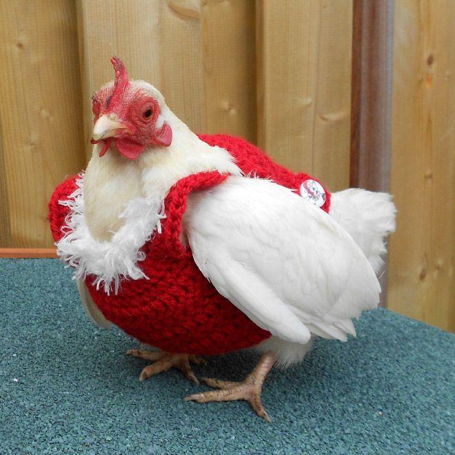 Wanita Mengaku Jadi Seekor Ayam