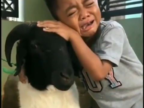 bocah tangisi kambing