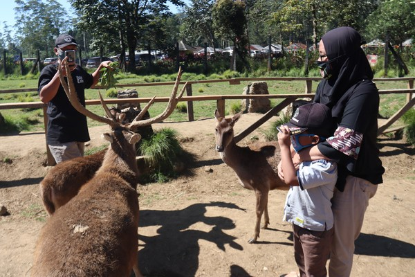 Kampung Cai Ranca Upas Rancabali cocok sebagai tempat wisata keluarga. (Wisma Putra/detikcom)