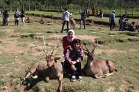 Wisatawan yang datang gantian berfoto dengan rusa-rusa di penangkaran ini. (Wisma Putra/detikcom)