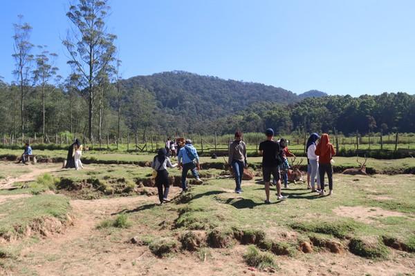 Kampung Cai Ranca Upas Rancabali punya pemandangan indah, padang rumput indah dan hewan liar mirip dengan Afrika. (Wisma Putra/detikcom)