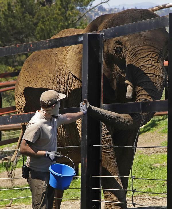 Era new normal pun diharapkan dapat membantu roda perekonomian dari sektor pariwisata dapat kembali berputar sehingga mampu mengatasi krisis finansial yang dialami sejumlah kebun binatang di AS tersebut. AP Photo/Ben Margot.