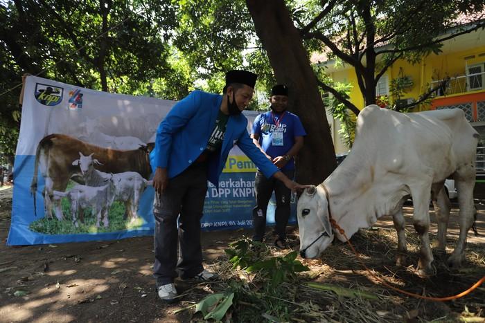 Organisasai Kepemudaan KNPI menggelar Qurban bersama dengan mengumpulkan hewan kurban dari pengurus dan donatur untuk didistribusikan kepada masyarakat yang membutuhkan.