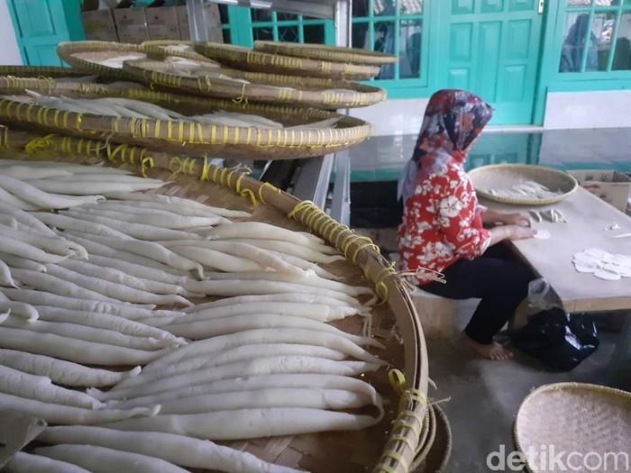 produksi sotong ciamis