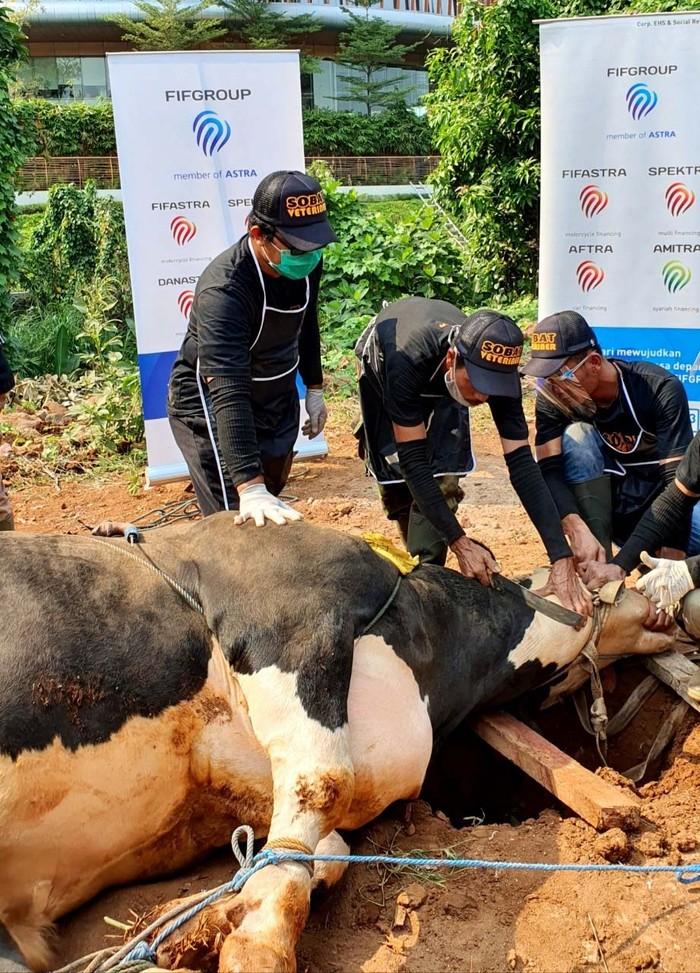Pada Idul Adha tahun ini, FIFGroup menyalurkan dana sosial syariah untuk sedekah kurban senilai Rp 1,7 miliar. Sebanyak 537 kambing dan 2 ekor sapi telah disebar.