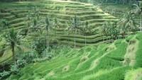2 Aktivitas di Bali Ini Masuk yang Terbaik di Dunia
