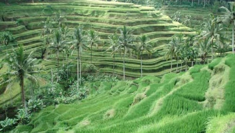 Sawah di Ubud