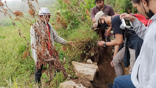 Situs tangga kuno atau orang dataran tinggi Dieng menyebut ondho budho ini ditemukan para pendaki Bukit Sipandu di jalur Bitingan, Desa Kepakisan, Kecamatan Batur, Banjarnegara. (Uje Hartono/detikcom)