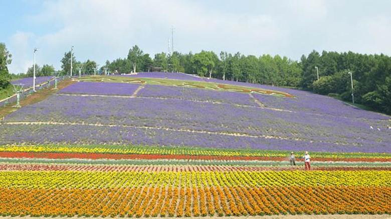 Hokuseiyama lavender garden