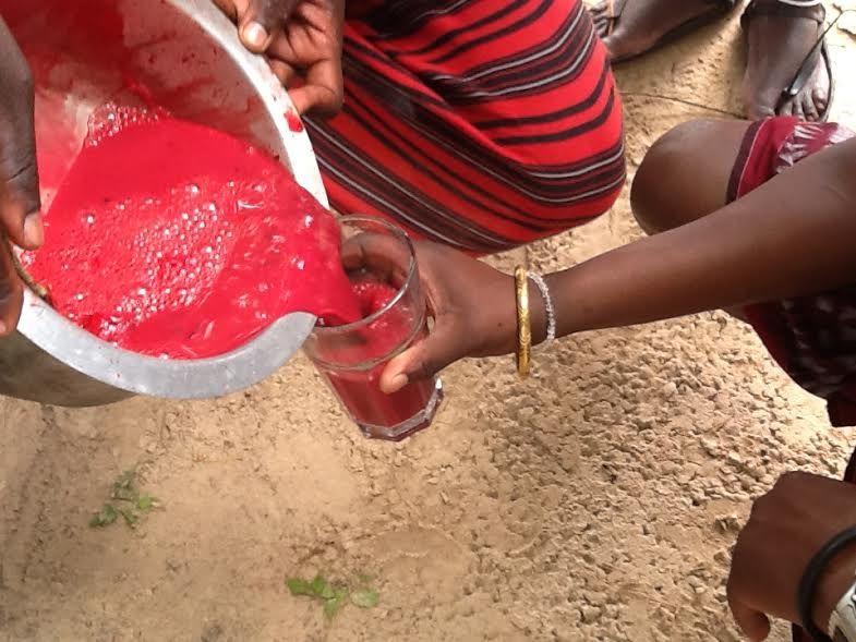 Suku Maasai Minum Darah Sapi