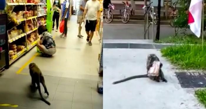Aksi monyet curi roti di supermarket