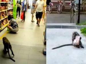 Aksi Monyet Curi Roti di Supermarket Ini Jadi Viral, Lihai Banget!