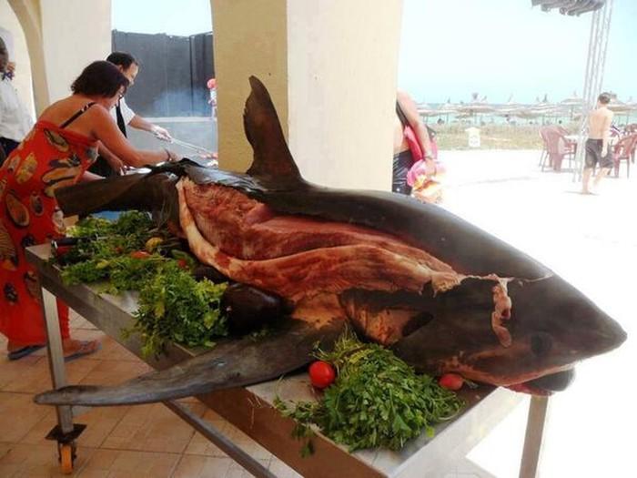 Hidangan Ikan Hiu Mancangeara