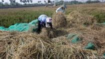 Menahan Gelombang PHK Lewat Sektor Pertanian