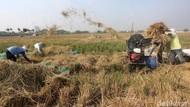 Ekonomi Indonesia Minus, PDB Sektor Pertanian Masih Positif