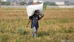 Sektor Pertanian RI CumaTumbuh 2,19%, Apa Penyebabnya?