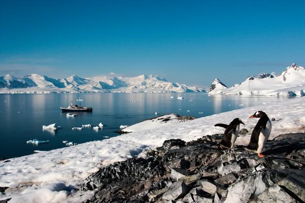 Di Pulau Cuverville, Antartika kamu akan temui koloni penguin. Kamu kayak sembari melihat para penguin nongkrong di batu-batu, seluncuran di gunung es, berenang dan menyelam di laut, bahkan mereka berenang di bawah kayak kita. (iStock)