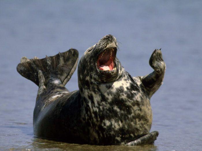 anjing laut lucu