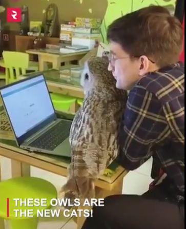 Uniknya Kafe Burung Hantu