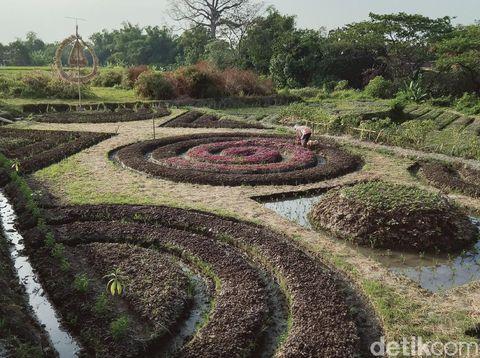 Ladang bermotif batik di Kecamatan Polanharjo, Klaten, Kamis (6/8/2020).