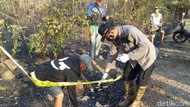 Kerangka Manusia Ditemukan di Sisa Kebakaran Hutan Baluran