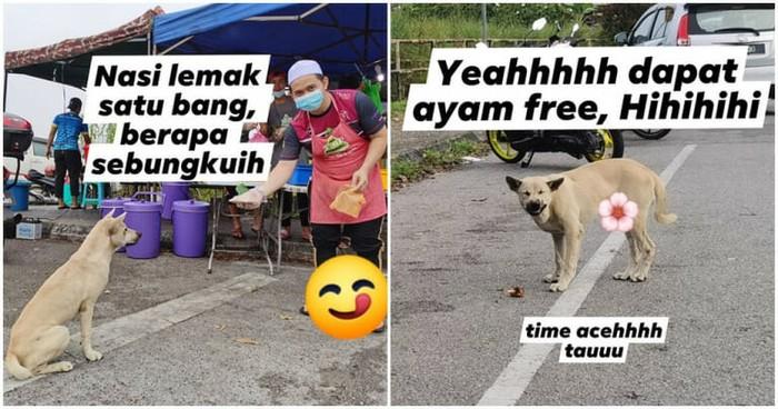 Pintarnya! Anjing Ini Ikut Antre Beli Nasi Lemak