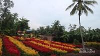 Taman Bunga Tersembungi di Klaten, Kamu Tahu?