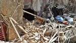 Anjing Pelacak Bantu Pencarian Korban Ledakan di Lebanon