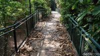 Diketahui, Babakan Siliwangi Forest Walk kerap dikunjungi warga karena konsepnya yang unik dan menarik. Berjalan di atas forest walk memang memberikan sensasi yang berbeda. Namun ketika berjalan lebih jauh, masih banyak sampah dedaunan kering yang berjatuhan di dek kayu berukuran 1,5 meter.