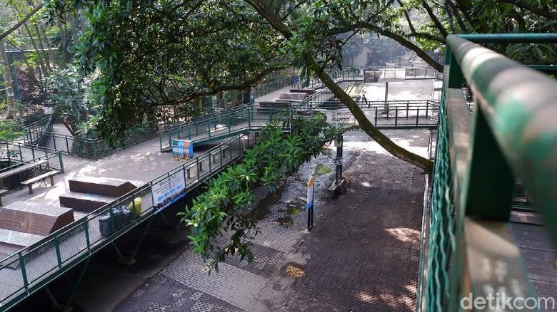 Objek wisata Babakan Siliwangi Forest Walk ditutup sejak bulan Maret guna cegah COVID-19. Lima bulan ditutup, seperti apa kondisi ruang terbuka hijau itu kini?