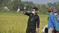 Bila Ada Resesi, Mentan Pede Sektor Pertanian Tak Banyak Terganggu