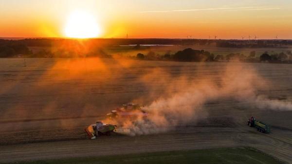 Panen gandum saat matahari terbenam di Jerman. Jens Bttner/dpa via AP