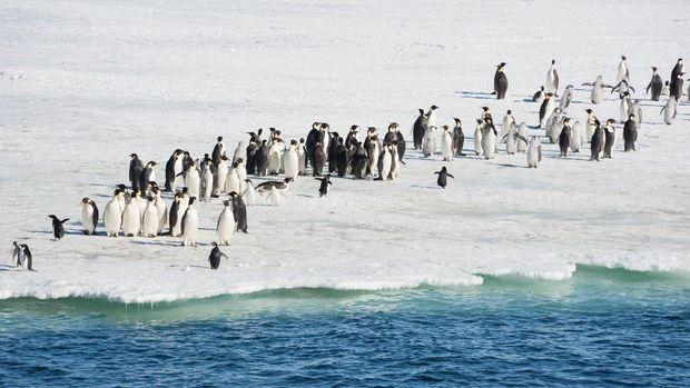 Kelompok penguin kaisar dan penguin Adelie di hamparan es.