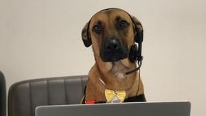 Aksi Seekor Anjing yang Bekerja di Dealer Hyundai