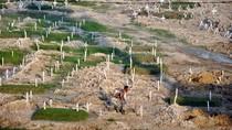 Lahan Makam Khusus COVID-19 di Medan Penuh