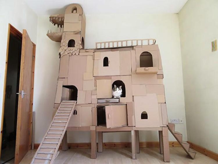 rumah kardus kucing