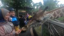 Sensasi Memberi Makan Hewan di Batu Secret Zoo