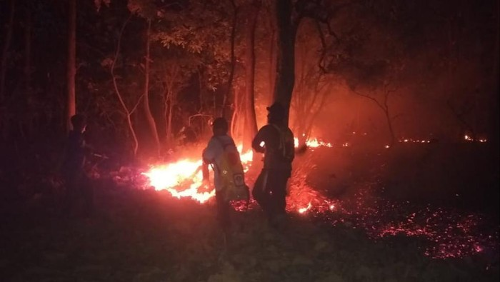 Kebakaran terjadi di Hutan Baluran Situbondo dalam dua hari terakhir. Kebakaran terjadi dua kali hingga menghanguskan lahan jati seluas 5,2 hektare.