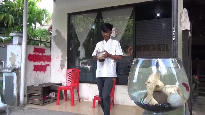Pelajar SMK di Parepare budidaya ikan cupang untuk membeli kuota internet, MInggu (9/8/2020).