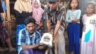 Viral Lahirnya Anak Sapi Berkepala Dua di Probolinggo