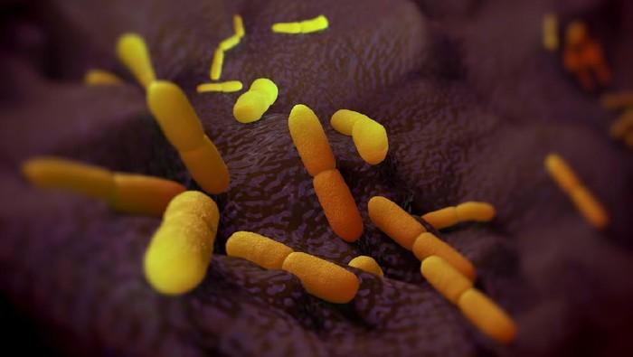 Yersinia pestis bacteria, artworkYersinia pestis bacteria, artwork